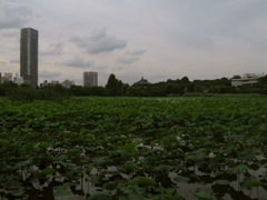 20090620c