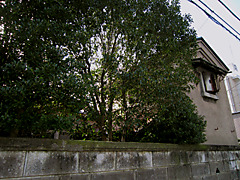 20111126d1