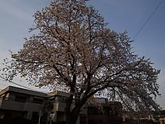 20140401a1
